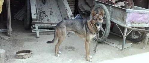 家里养狗的要注意,监控拍下南康龙岭偷狗贼全过程……