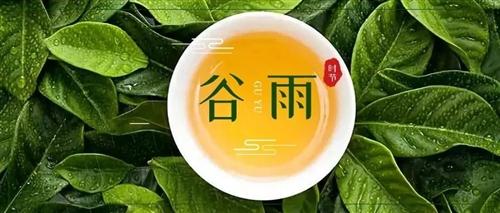 春到谷雨,這杯廣元茶正當時
