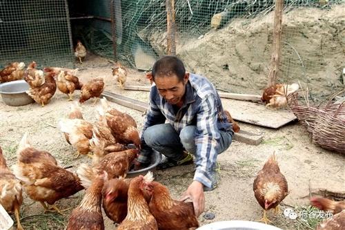 武家庄镇:以农促旅兴发展