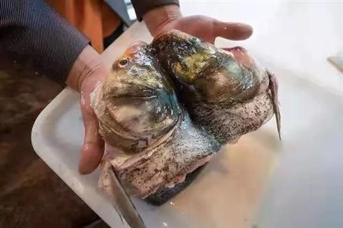 原来身材好的人都喜欢吃美蛙+鱼头