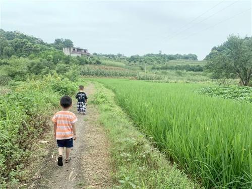 【回农村】合江娃儿些,你们小时候的快乐是不是一起追杀它...