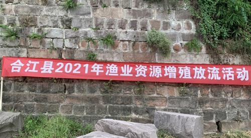 合江县:六十万尾鱼苗增殖放流长江