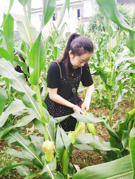 泰和世家农耕基地的菜吃得了,走!跟着我们去摘菜......
