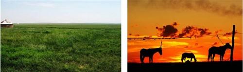 旅游路线|沙漠骆驼