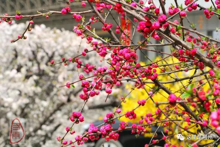 �D集・朔州丨冬雨告�V你:宅家里,�涯钤��,家�l的那些美景都在�@里了!