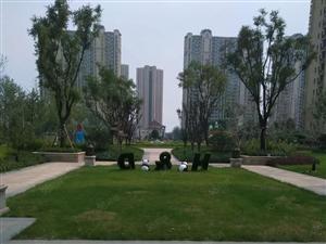 恒大绿洲沂河边精装修刚需户型114三室两厅一卫来电享额外优惠