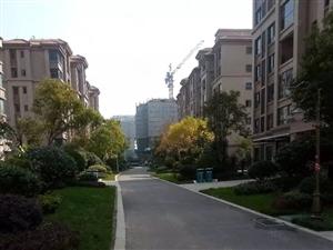 急售!碧桂园一楼带院户型,院大300平,有意者速购。