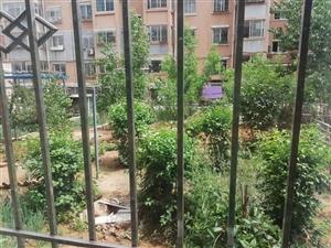 欣悦家园一楼落地窗带花园亚玲中介