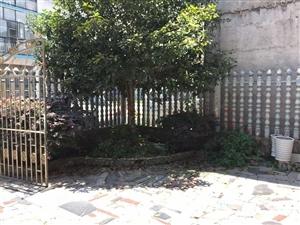 老河村花园精装私房出售