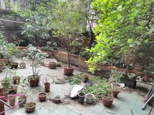 精品3房一楼带花园好房