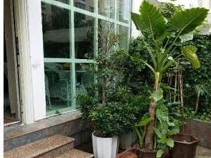 惠明二小学期房别墅高端高绿化小区带超大花园露台
