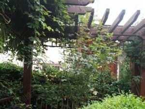 奥林雅苑精装2房,双证满两年过户费低,拎包入住,不容错过!