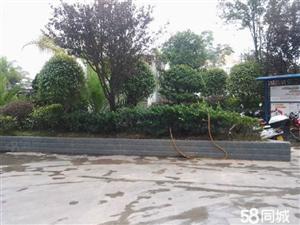 业主急售龙福三苑小区特价电梯房景观房视野开阔单价3800