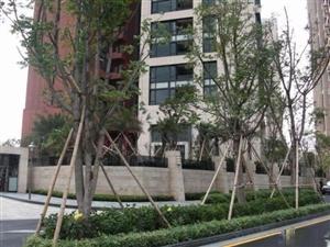 保定龙潭公园封顶准现房标准三室首付21万可分期