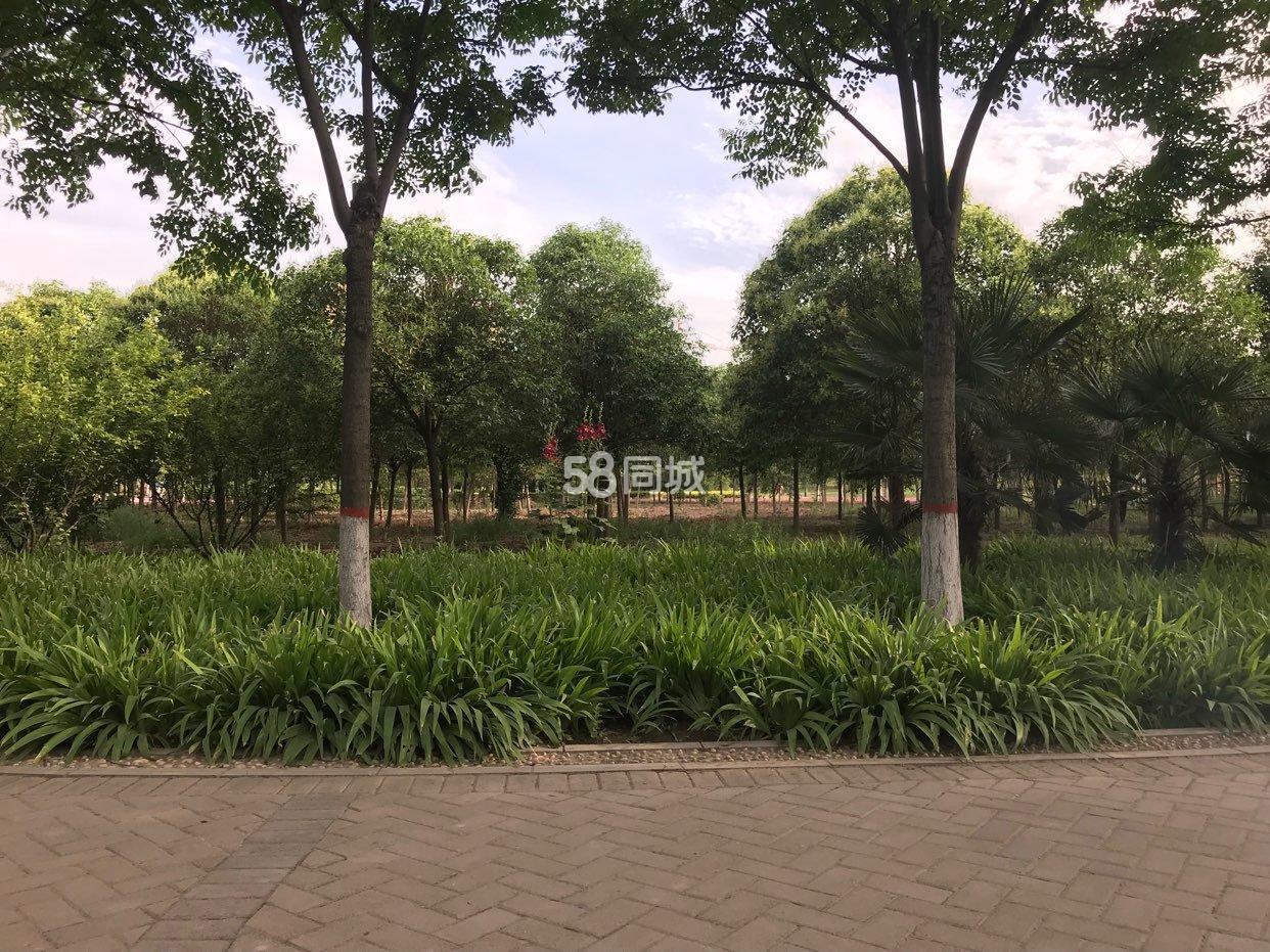 新濠天地平台七贤公园畔高档小区2室1厅1卫