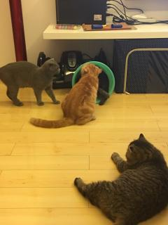 加菲猫转卖,非诚勿扰