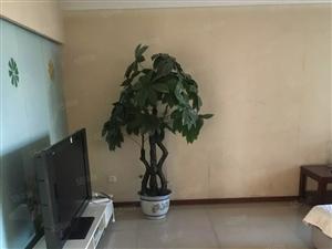 盛世花园精装三室大产权高品质可分期