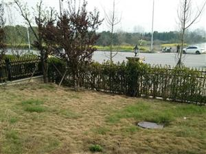 凯旋城花园洋房有一个超大的后花园送两个免费停车位