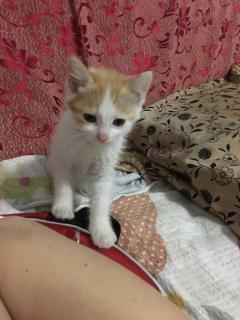 捡到一只小猫,希望送给有缘人
