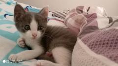 两个月大猫咪求带走