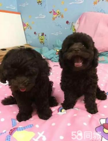 【官方质保】中国最大实体狗场售各种世界名犬 包养活