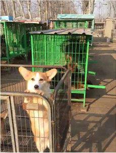 狗场名犬出售,欢迎上门挑选,全省可送货,包纯种健康