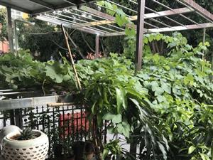 望龙苑1跃2带两车位+送55平米露台+门前带小花园