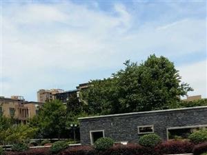 楚天城花园洋房含车库出售65万