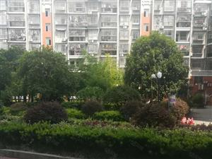 香桂园单身公寓中层精装房采光好,急出租