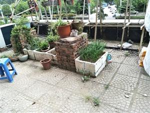 一高南凤凰国际花园,60平方米,标准一室一厅,可改两室!