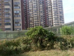 光明西路十五中西校鑫和国际佳园9楼电梯房2室1厅83平方