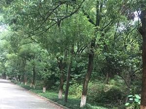 永利娱乐场市委一楼两房出售环境优美绿树成荫养老好地方