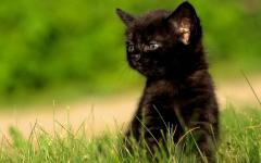 小猫不听?#23433;?#35201;钱会跟着人到处跑