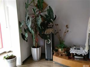优质好房精装修,带家电、家具,每平米3000元