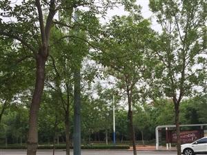 天津颐欣园179平196万对外出售
