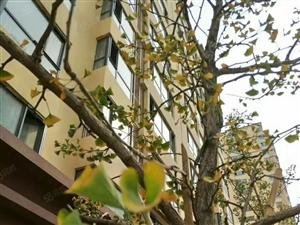 鹏洲丽城超低价、、可贷款、低首付、包更名、准现房、
