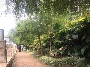 城中心位置高绿化宜居小区