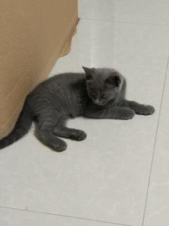 可爱的小蓝猫 寻找主人