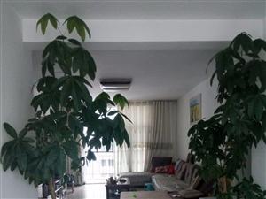 澳门拉斯维加斯游戏园丁小区3室2厅2卫137平米