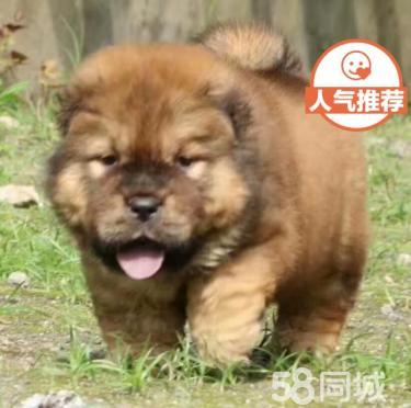 【可爱的松狮 签协议包健康qwq】