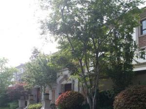 圣兰菲诺一期别墅现房前后大院有钥匙有证北京路南坊