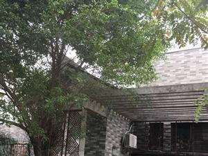 鸿天阁高档别墅带前后庭院只卖680九小侨中双学校