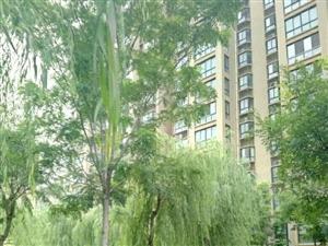 青岛路朗润春天3楼124平3室2厅毛坯房带车位带地下室118