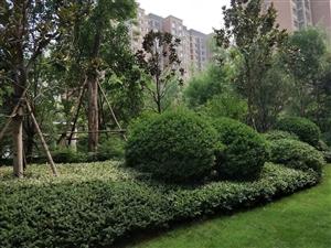 白鹭源现房小区,两居室,精装修,临近地铁兰河公园站,交通便利