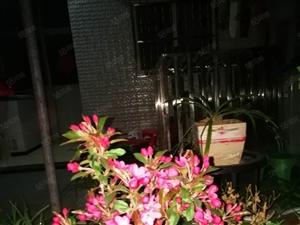 霍邱县城关镇二中大门口五岳新村门面加套房出售
