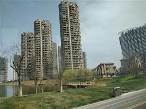 碧桂园十里金滩,滨海城,轻轨旁,不限购不限贷,一线海景房