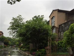 碧桂园二期联排别墅,171+82!证满五年,过户费超便宜