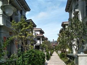 碧桂园钻石湾别墅,占地96平方,花园170平方,地下室200