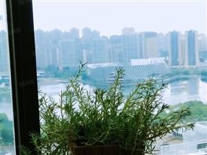紫薇国际广场3室2厅2卫豪装湖景144平229万