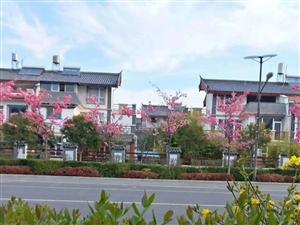 投资人的福音,雪景公寓一口价37万,急售酒店统一装修